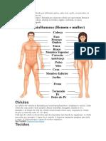 O corpo humano.docx