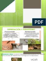 Depredacion y Parasitismo