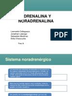 catecolaminas y derepsion- opiodes