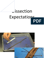 04 dissection rules
