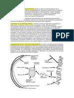 Las drogas que atacan la pared bacteriana ejercen su efecto a través del bloqueo de su síntesis.docx