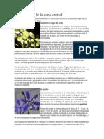 Flora Chilena de La Zona Central