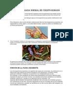 Flora Microbiana Normal de Cuerpo Humano