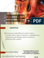 2. Anatomia Basica