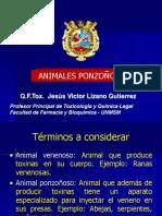 Animales Ponzo Parte 2