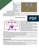Sistema Circulatorio Abierto y Cerrado