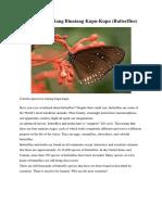 Text Report Tentang Binatang Kupu