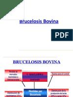 Brucelosis Presentacion
