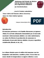 Cultivo de Manzana (1)
