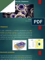 CH 2 - Organelas Do Citoplasma