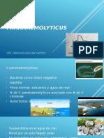 Vibrio Parahaemolyticus Infecto