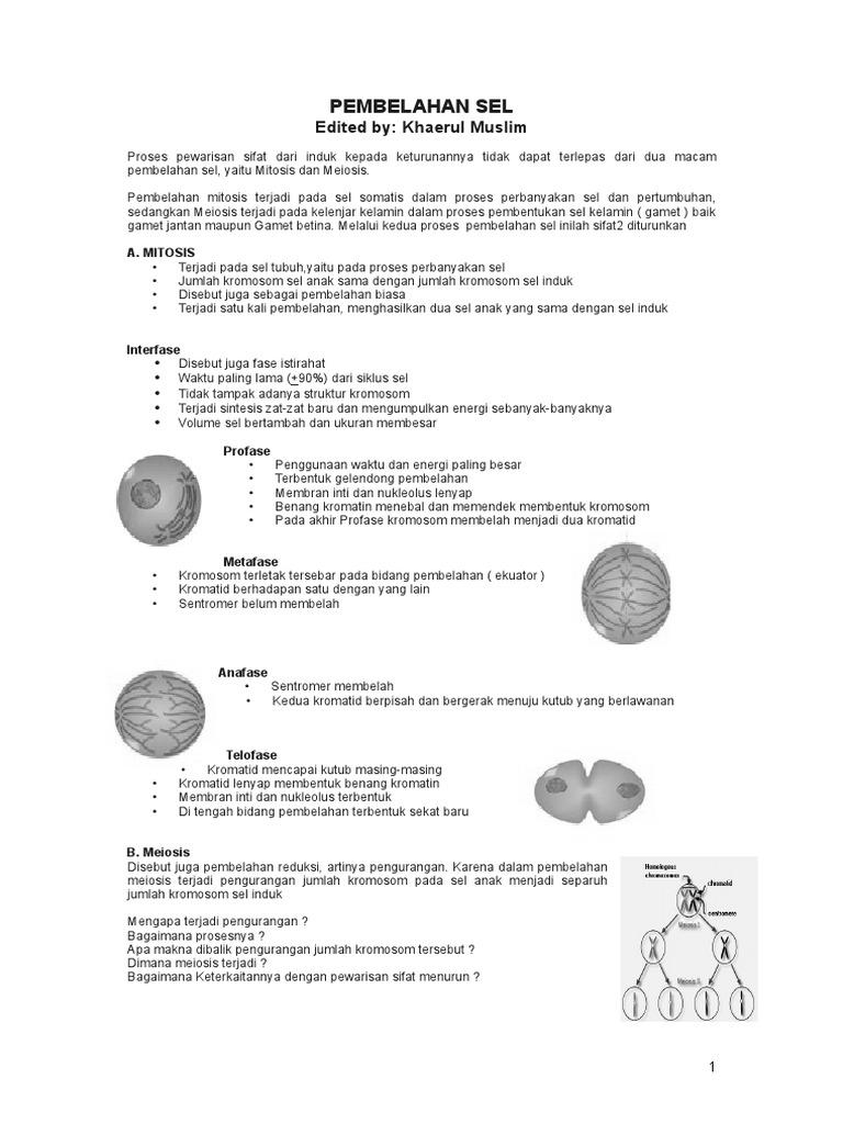 38233711 pembelahan sel mitosis dan meiosisc ccuart Images