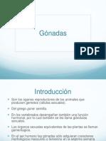 gonadas-120816125350-phpapp01