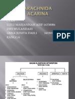 Arthropoda Acarina
