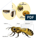 Practica de Lectura  vida de la abeja