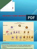 28. Leucocitos y Sistema Inmunitario 12 05 2018