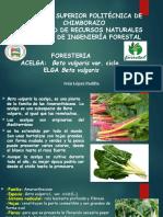 Manejo Del Cultivo de Acelga.ivan Lopez