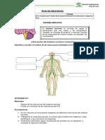 Practico Sistema Nervioso 4 Basico