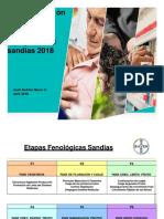 Tips Produccion y Costos Sandias Chile 2018