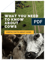 cattle farming - all you need to know-2
