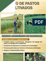 4.2 Manejo de pasturas (Sem 4) (2).pptx