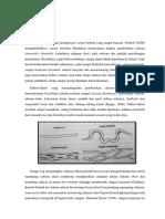 Lingkungan Pengendapan (Sistem Sungai)