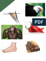 Pijasal de Imagenes