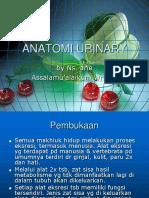 Anatomi Urinary