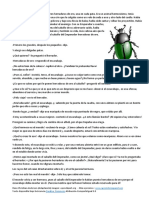 escarabajo.pdf