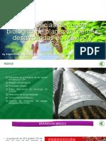 05 Experiencias de Control Biologico de Plagas en Berries Desarrolladas en Mexico y Eeuu Rogelio Castaneda 1426062593