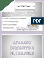 Nutricion-exposicion-antropologia