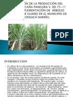 Evaluación de La Producción Del Cultivo de Caña Diapo