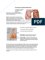 Estructura Del Sistema Respiratorio