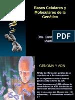 Bases Celulares y Moleculares de La Genc3a9tica