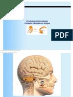 Nueva Medicina Germanica Constelaciones Cerebrales Cerebelo NMG