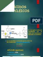 ÁCIDOS NUCLEICOS biología