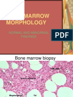Bone Marrow Morphology