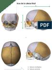 Clase 1 Osteologia de Cabeza