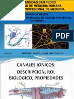 BIOFISICA POTEN Potencial de Reposo y Potencial de Accion 100518235110 Phpapp02