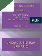 182208186-SEMIOLOGIA-APARATO-GENITOURINARIO.pdf