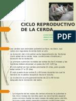 Ciclo Reproductivo de Los Cerdos