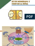 Receptores y Transduccion