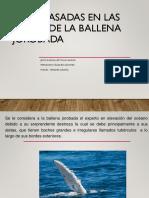 Aspas Basadas en Las Aletas de La Ballena