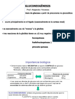 11 Gluconeogenesis y regulación del Met Glucosa
