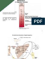 09 Glicolisis-Fermentacion