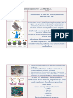 Función Biológica de Las Proteínas