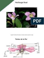rena123.pdf