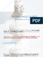02 TENDINOMUSCULARES
