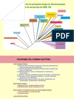 Lección 10. Bacteria. Proteobacterias