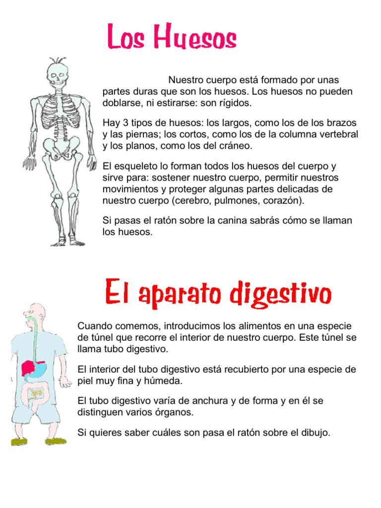 Nuestro cuerpo está formado por unas partes duras que son los huesos